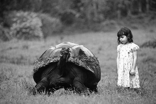 young girl and tortoise